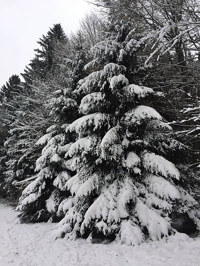 tannenbaum.jpg