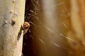 Macro Spider