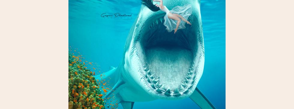 shark-gallery.jpg