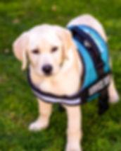 gooddog-hq-BuddyHR39BuddyBigVestCropped.