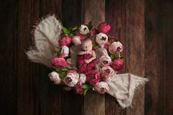Newborn Photographer MA Lee NY VT