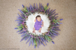 Newborn Photographer Lee Lenox