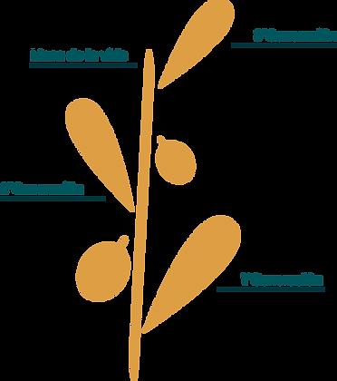 JJ Galocha Logo.png