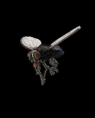 Fly.I03.2k.png
