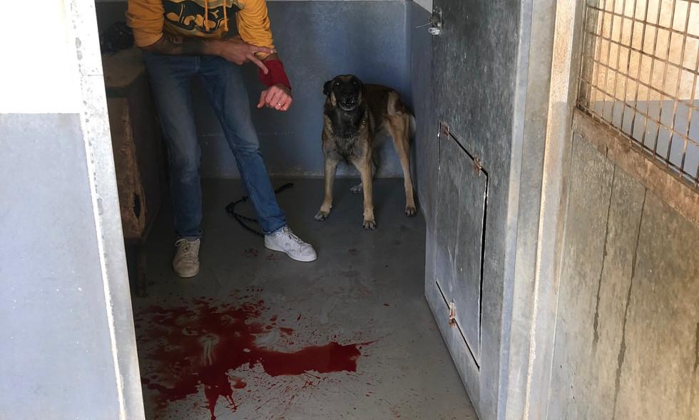 PSCF 2 Morsure d'un chien