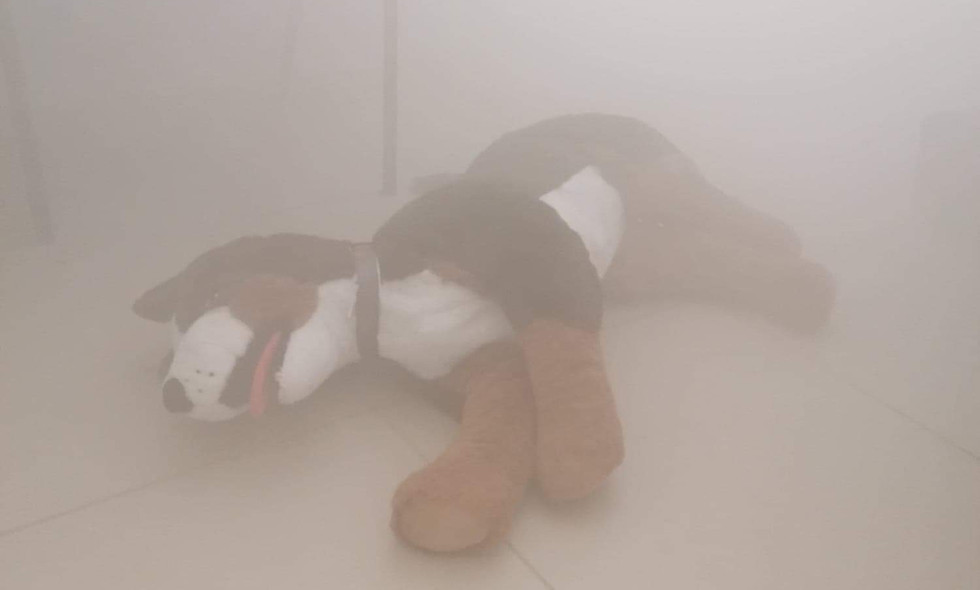 PSCF 1, le chien dans les fumées