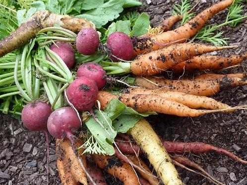 Carrot Seeds & Radish