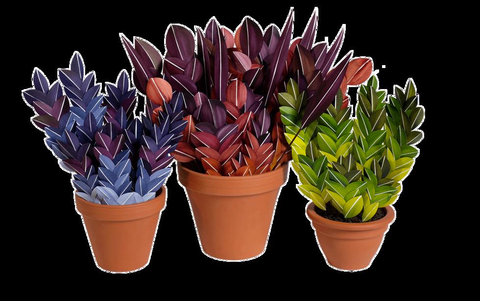 Drei Bunte 2019 Zimmerpflanzen erschaffen aus Papier - Paperart