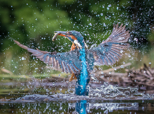 2019RFNHM_PDI_011 - Splash by Terry Hanna.