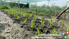Tai County Chemical always prioritize the environment to the society by planting within the factory and also proven that the company is harmless.