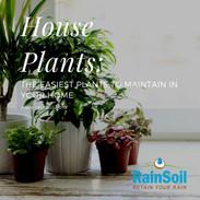 House-PLants_.jpg