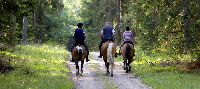 NEARBY - horses