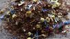 So Why Rooibos Tea?                   The idea behind Oh So Prettea