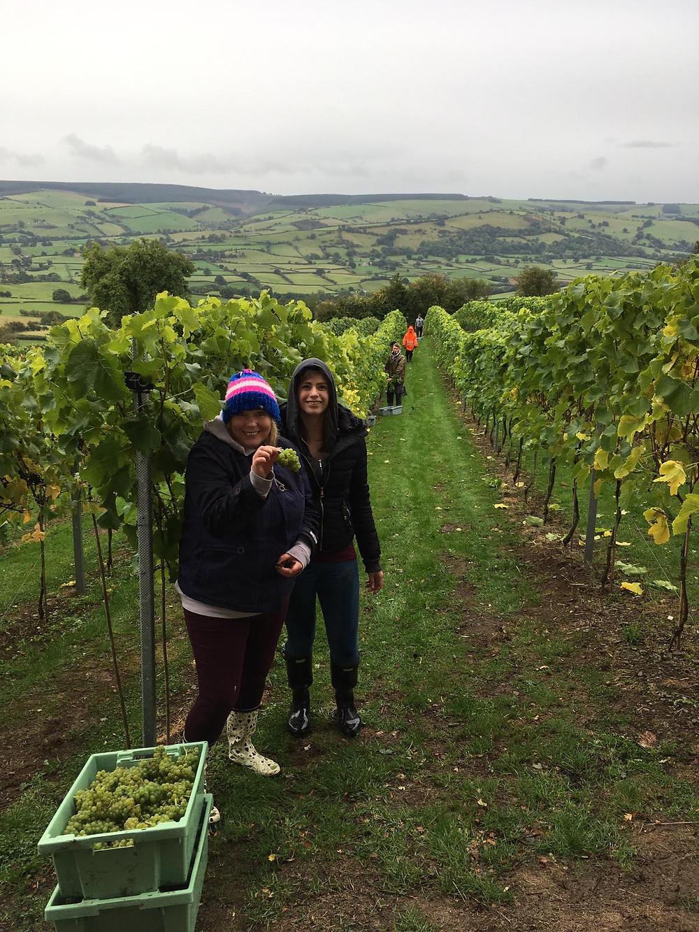 Wine Wales