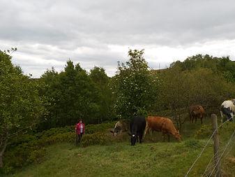 ann and cows.jpg