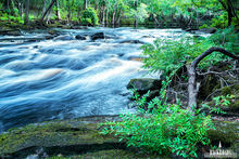 Fern Rapids