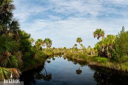 Palm Head Creek