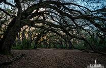 Oak Garden Sunset
