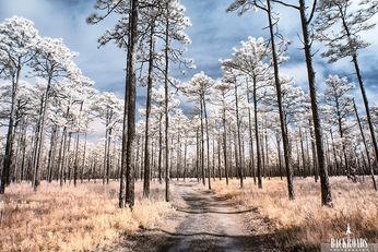 Pine Flat Road