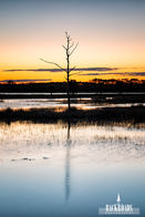 Standing Tree Sunrise
