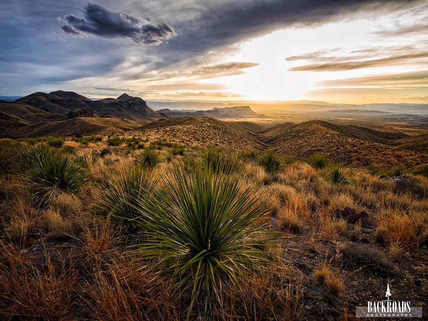 Dagger Yucca Sunset