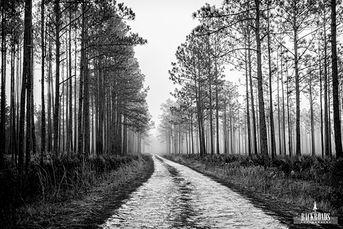 Foggy Pine Road B&W