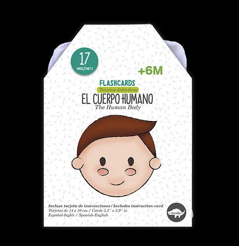 Flash Cards El Cuerpo Humano Cartas Didácticas