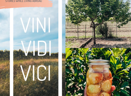 There's a Grappa Fruit Tree in our Yard! | VINI, VIDI, VICI