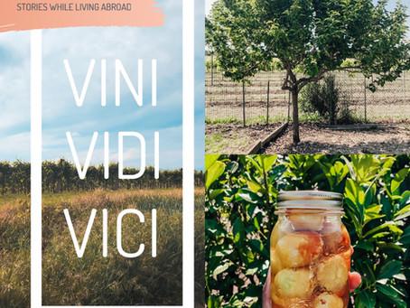 There's a Grappa Fruit Tree in our Yard! | VINI, VIDI, VICI