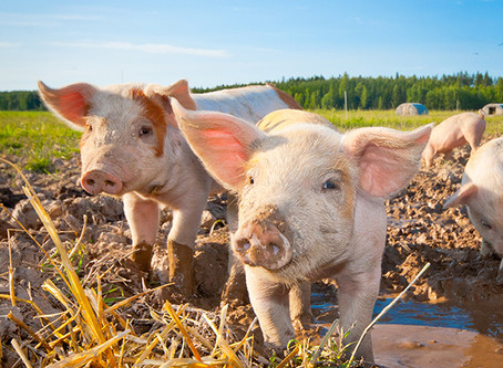 New JFAN LTE: JFAN Promotes Alternatives to CAFOs