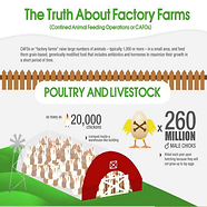 Inforgraphic The Truth About Factory Farms