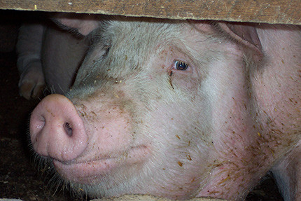 Important Public Hearing 6:00 pm TUESDAY on NEW CAFO Threatening Jefferson County