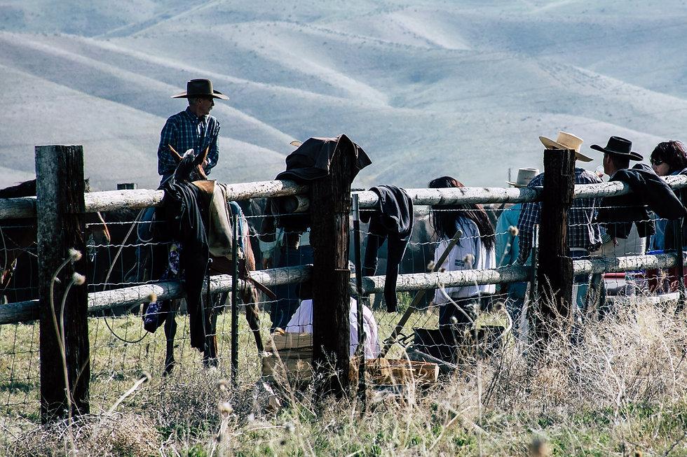 animals-cowboy-cowgirl-1069708.jpg