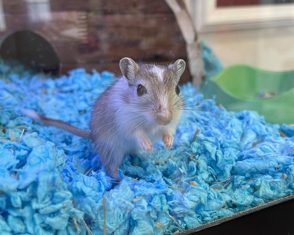 Female - Available
