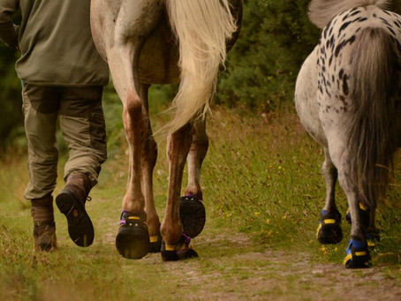 What are Flex Hoof Boots like?