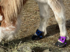 Hoof boots for 24/7 turnout