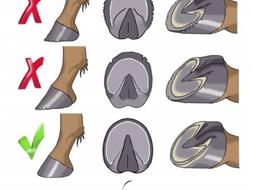 A correct trim