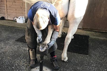 Holistic Equine podiatry consultation ho