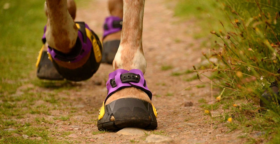 Flex hoof boots for barefoot horses and ponies_edited.jpg