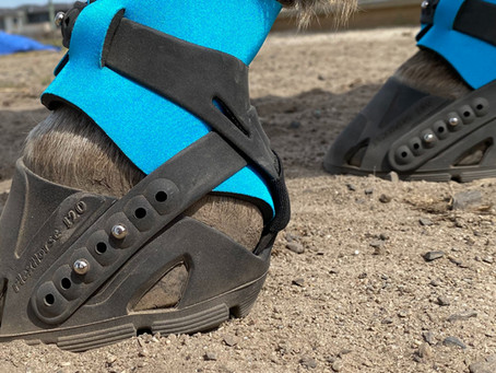 What kind of hoof shapes do Flex Boots fit?