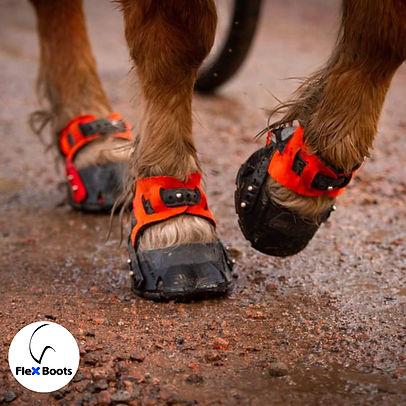 Flex hoof boots.jpg