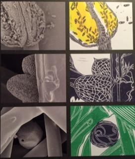 Electromagnetic Mages Vs Lino Printed Interpretations
