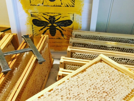 Beekeeping: The first 18 months