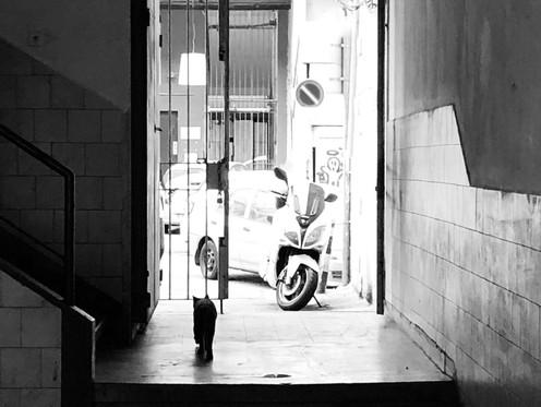 .מילי סדנאות. השראה. צילום  עיריית רעננה צוות מובילים דיגיטליים