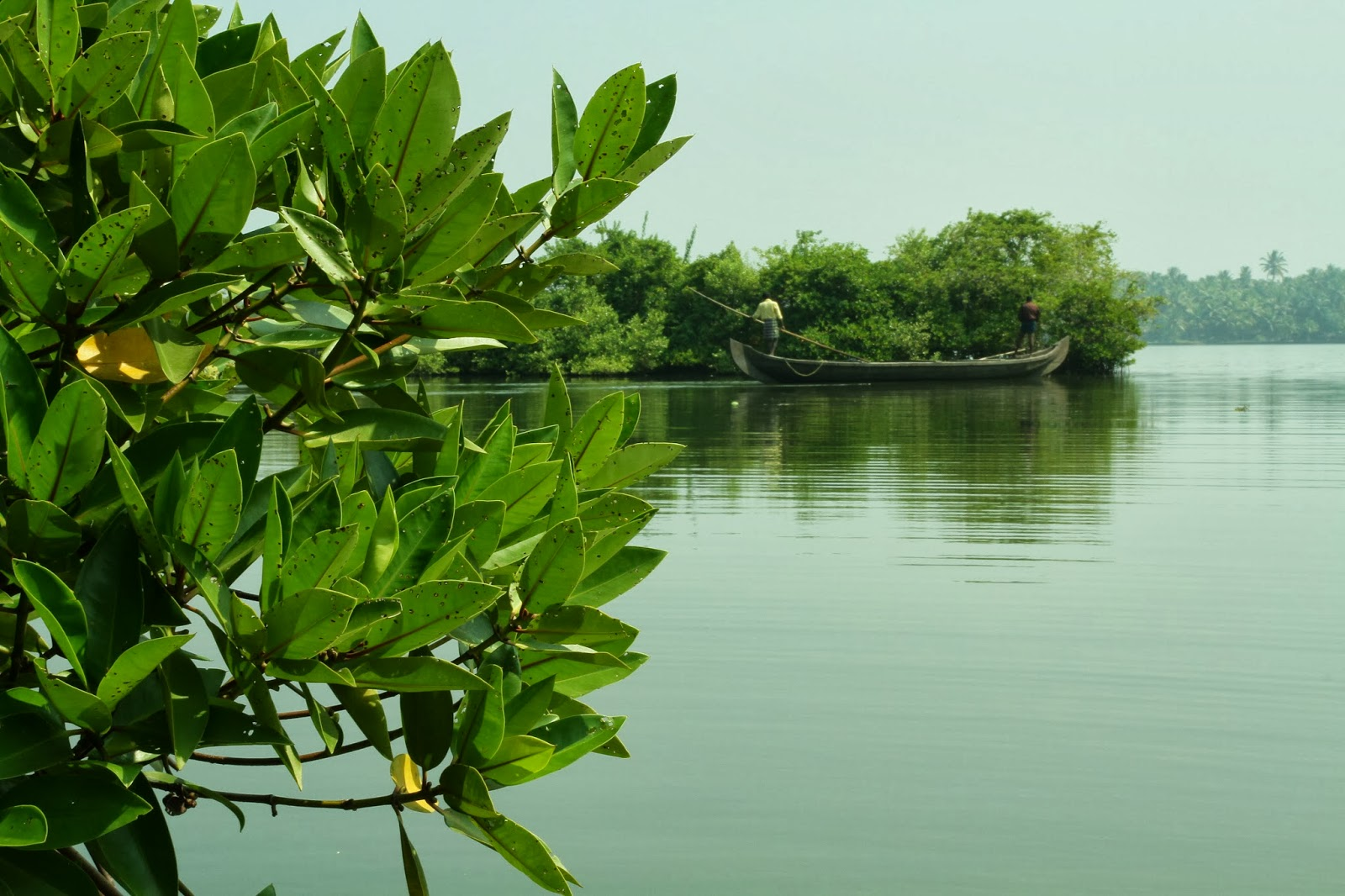Man and mangroves