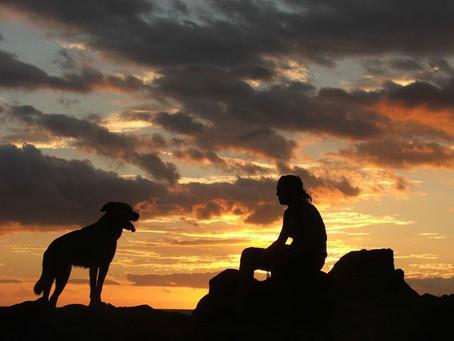 Reato di omissione di soccorso anche per gli animali, cosa dobbiamo aspettare?