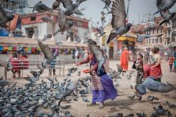 ktm pigeons