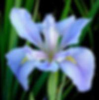 Sea_Wisp_grande.jpg