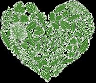 Corazon verde(3).png