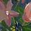 Thumbnail: MOONLIT GARDEN | Limited Edition Fine Art Print